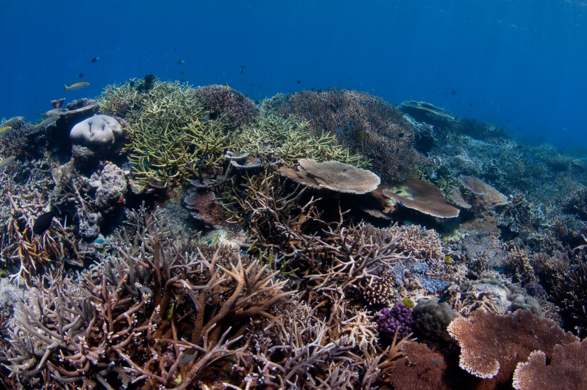 Coral reef with reef fish