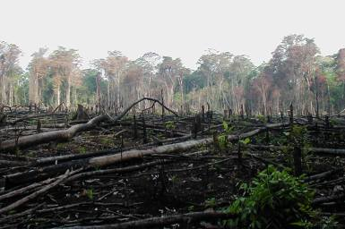 Blackened earth where a section of forest cleared by fire