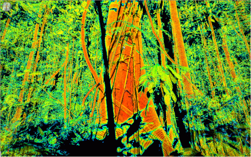 A laser scan of the rainforest at Robson Creek, showing the three dimensional forest structure. Image: P. Scarth, University of Queensland.