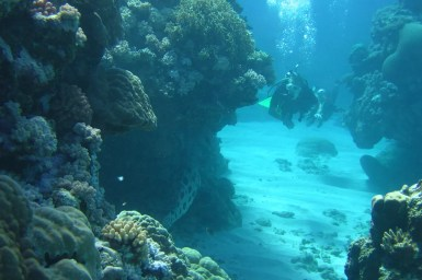 two scuba divers swim past a colourful coral wall on The Great Barrier reef