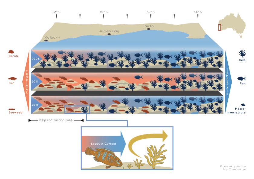 Infographic showing change in kelp and fish populations over time