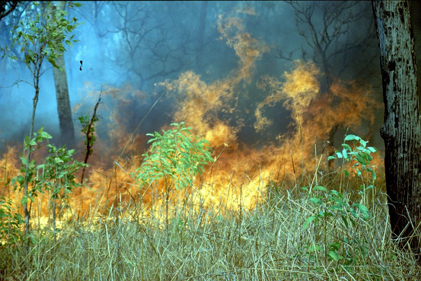Grass fire in a lightly wooded area.