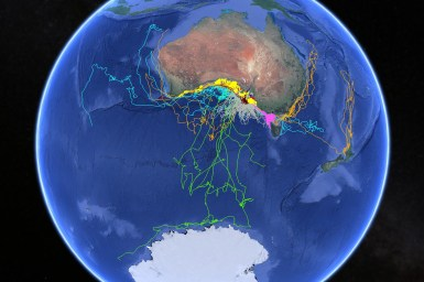 globe showing Australia with tracks of sea animals