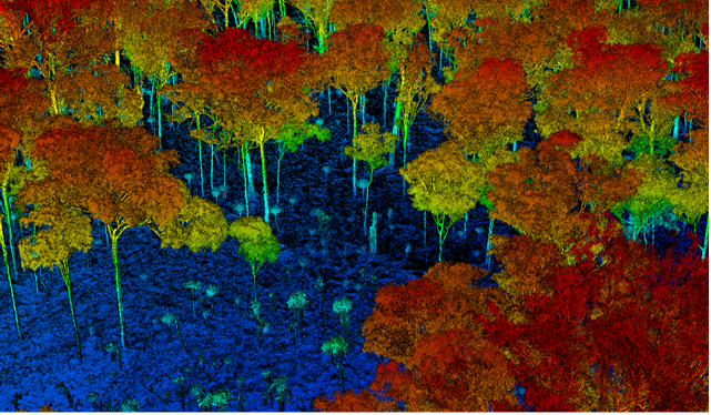computer generated image of tree canopy