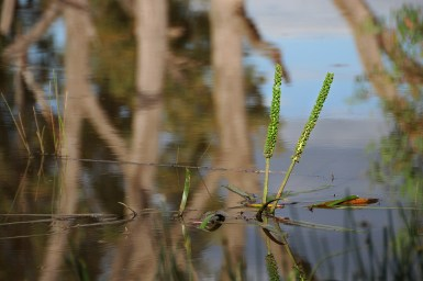reeds appearing above reflective water