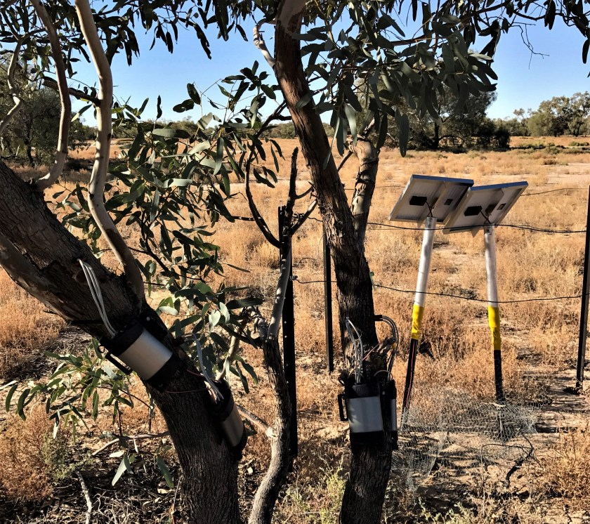 solar equipment on tree