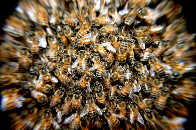 close up of bees in hive