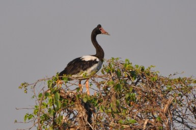 goose on tree top