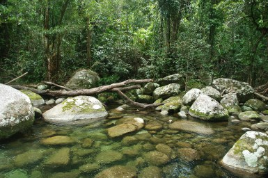 rainforest rocky pool surrounded by forest