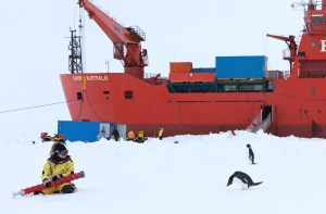 Dr Jess Melbourne-Thomas pictured next to a penguin, in front of a research vessel in Antarctica.