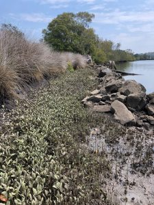 A coastline with some vegetation and rocks, surrounded by native grasses