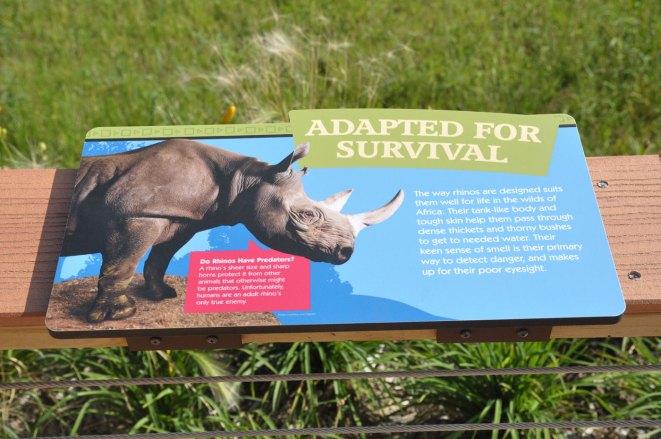 exhibit-rare-rhinos7