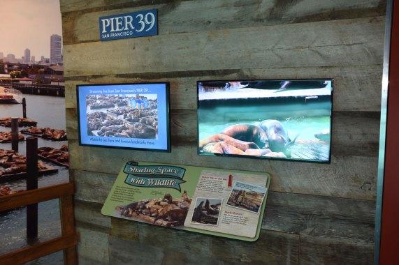 exhibit-sea-lion-5