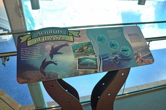 exhibit-sea-lion-7