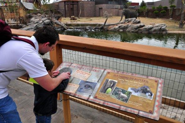 exhibits-elephant-10