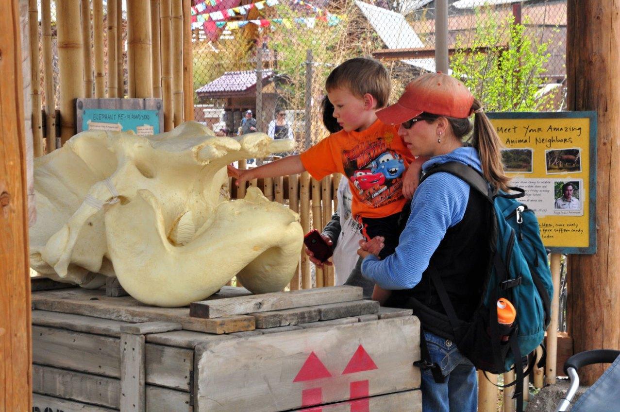 exhibits-elephant-15b