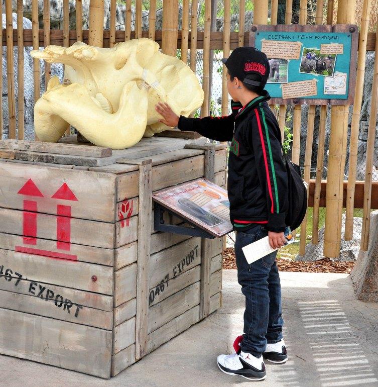exhibits-elephant-17b