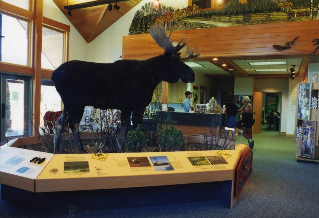exhibits-moose-4