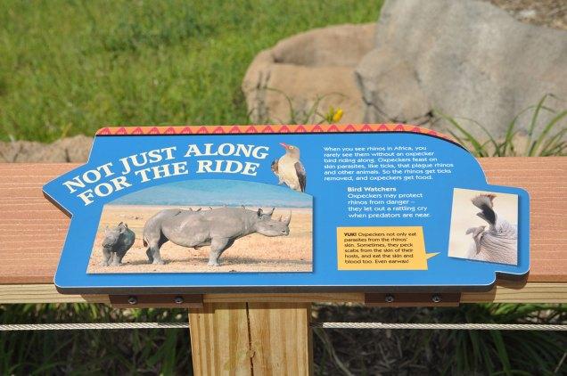 exhibits-rare-rhino-3