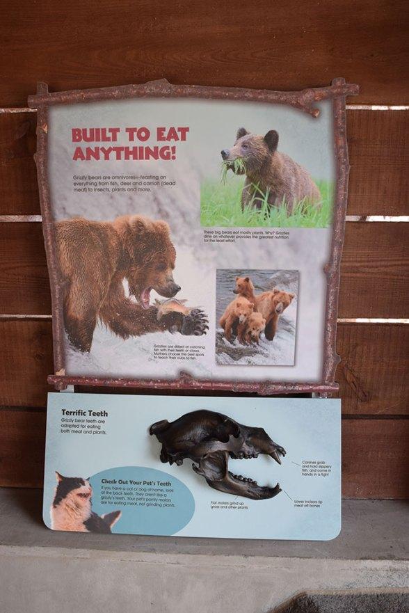interpretive-grizzly-8