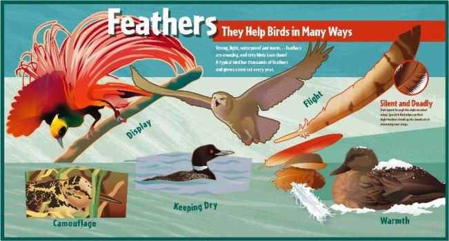 interpretive-world-birds-2