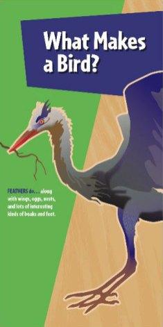 interpretive-world-birds-7