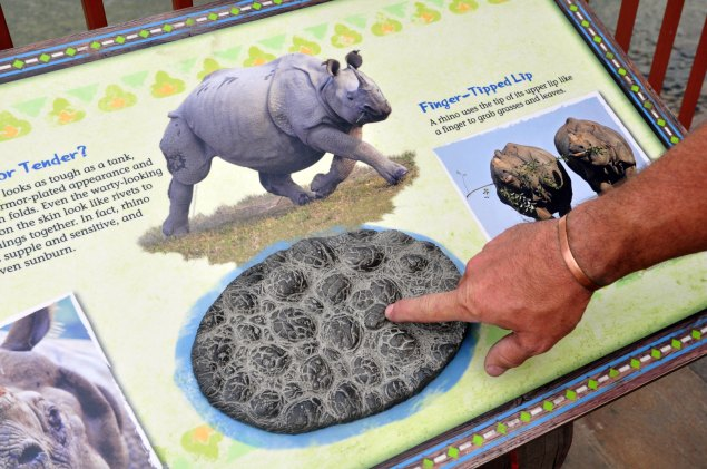 sculpture-rhino