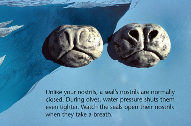 sculpture-seal-nose