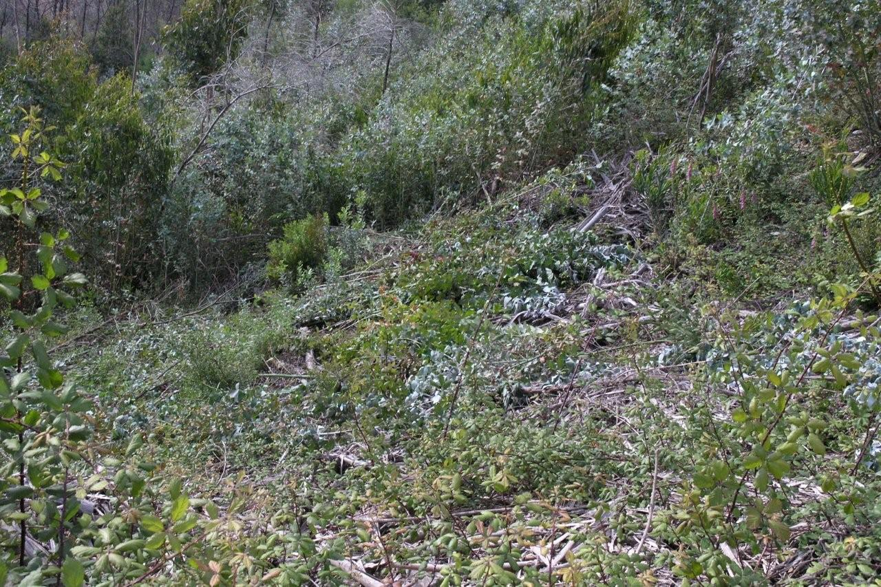 Área limpa da vegetação invasora