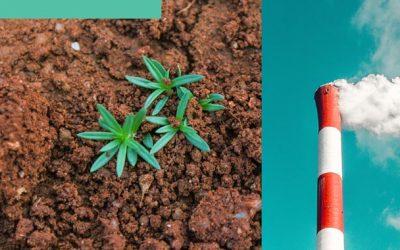 Hemp Can Clean Contaminated Soil