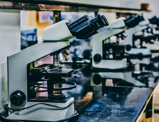 Scientists using Microscope to study cannabinoids