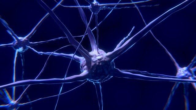 CBD vs THC nerve cells
