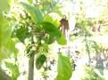 Apples have set fruit