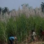 Warum sind Biokraftstoffe effizienter und umweltfreundlicher?