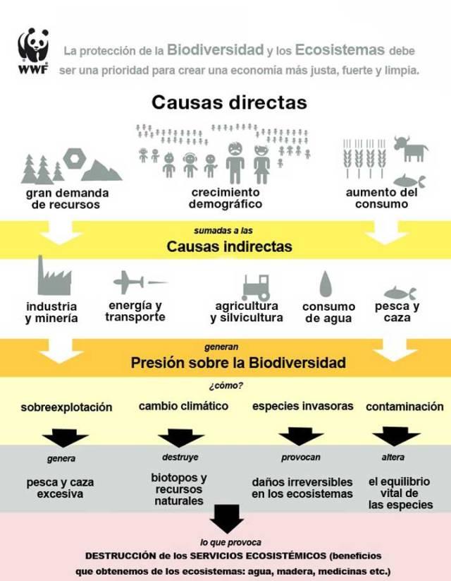 causas declive ecosistema