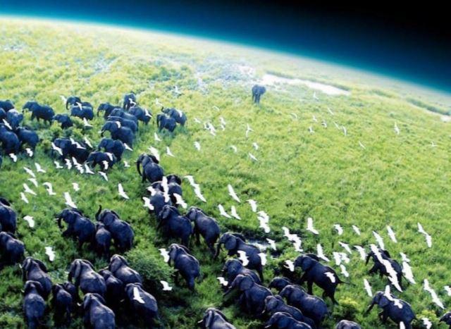 film el planeta