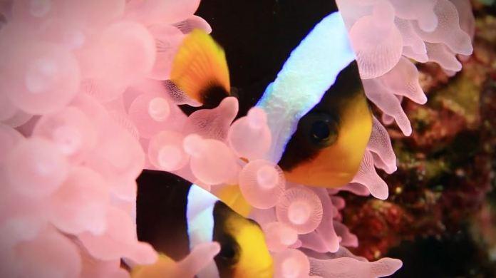tipos arrecifes de corales en oceanos