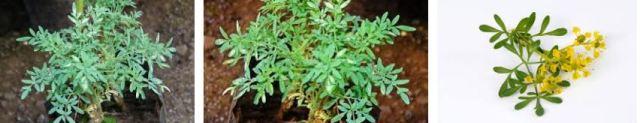 planta ruda casa
