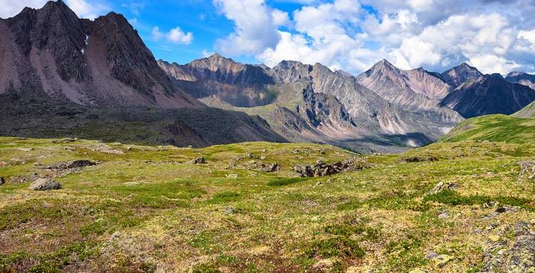 Tundra Clima fauna flora y sus caractersticas  OVACEN