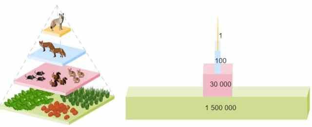 ejemplo pirámides de números