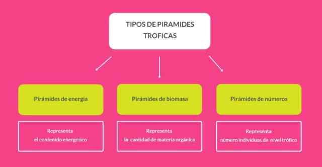 tipos de pirámides tróficas