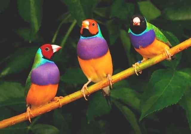cambio color de las aves