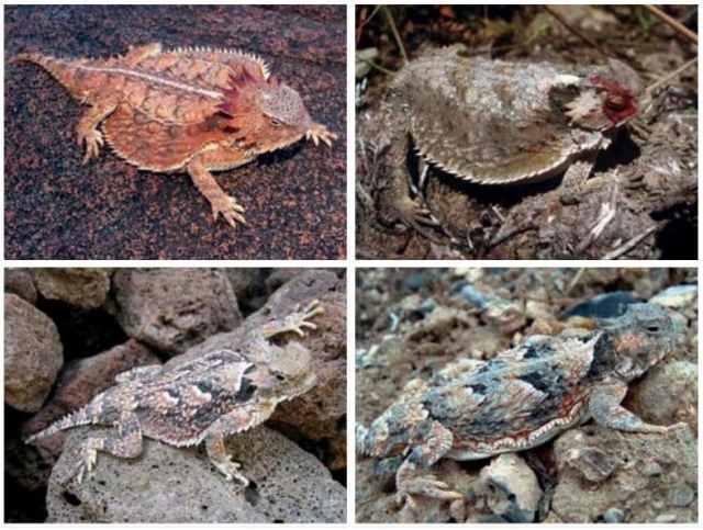 imágenes de varios camaleones