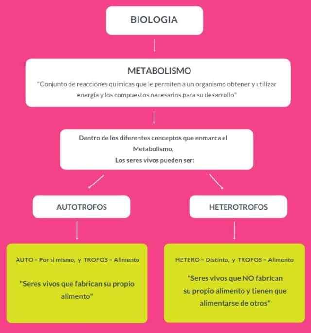 los organismos autótrofos
