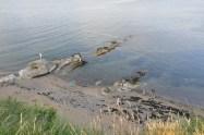 Plaża w St Andrews