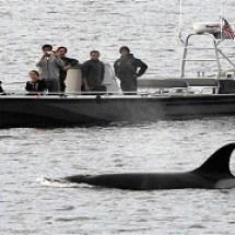 170613-whale-california-cr_adjusted-1
