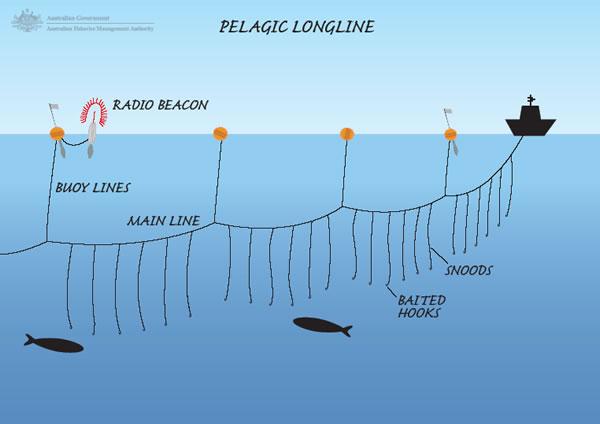 pelagic_longline