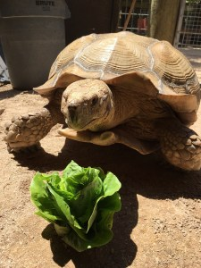 Animals Love Lettuce Too