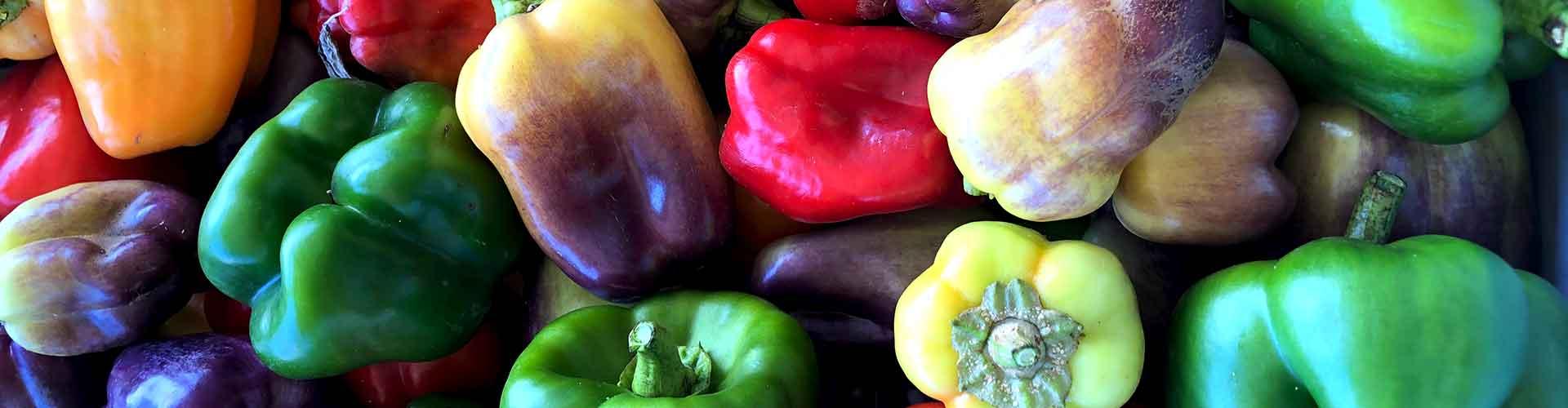 Harvested-bell-pepper-varieties-in-bucket1920