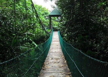 puente en bosque